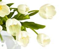 Ramo hermoso de tulipanes blancos fotografía de archivo