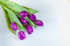 Ramo hermoso de tulipanes púrpuras en el fondo blanco Fotografía de archivo