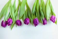 Ramo hermoso de tulipanes púrpuras en el fondo blanco Imagen de archivo libre de regalías