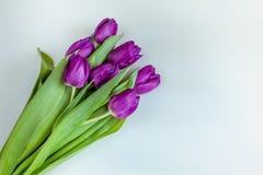 Ramo hermoso de tulipanes púrpuras en el fondo blanco Imagenes de archivo