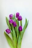 Ramo hermoso de tulipanes púrpuras en el fondo blanco Fotos de archivo libres de regalías
