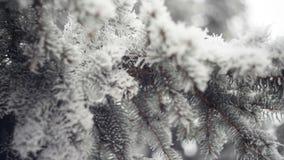 Ramo innevato di un pino nel parco di inverno Priorità bassa di natale archivi video
