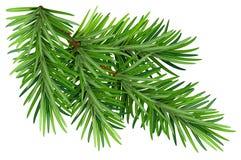 Ramo lanuginoso verde del pino Su fondo bianco illustrazione di stock