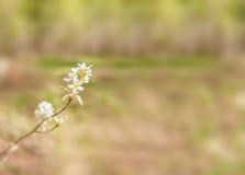 Ramo lilla con fogliame e foresta nei precedenti immagini stock