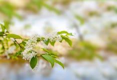 Ramo lilla con fogliame e foresta nei precedenti Fotografia Stock Libera da Diritti