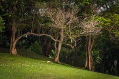 Ramo lungo dell'albero Immagini Stock Libere da Diritti