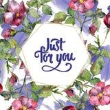Ramo magenta de la acuarela de flores salvajes de las rosas Flor botánica floral Cuadrado del ornamento de la frontera del capítu Fotografía de archivo libre de regalías