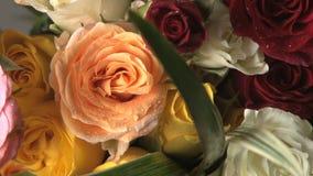 Ramo multicolor giratorio de la rosa almacen de metraje de vídeo