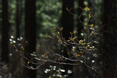 Ramo na obscuridade - floresta verde do rododendro, fim acima sunlight Fundo borrado Fotos de Stock Royalty Free