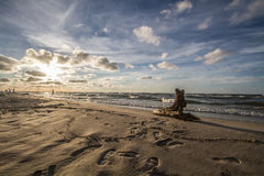 Ramo na praia Fotos de Stock