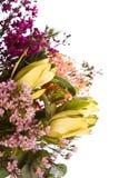 Ramo nativo australiano de la flor Foto de archivo libre de regalías