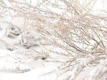 Ramo nevado imagem de stock