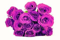 Ramo púrpura de las rosas de la fantasía en el fondo blanco Estilo de la vendimia Foto de archivo