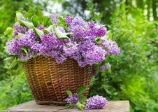 Ramo púrpura fresco de la flor de la lila en la madera imagen de archivo