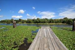 Ramo paludoso di fiume Lafourche, Luisiana fotografia stock libera da diritti