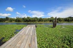 Ramo paludoso di fiume Lafourche, Luisiana fotografie stock libere da diritti