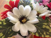 Ramo perfumado de la maceta blanca seca de la flor multicolor Fotografía de archivo libre de regalías