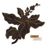 Ramo preto da árvore de café Choque dourado Ilustração botânica Vetor Fotografia de Stock Royalty Free