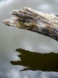 Ramo quebrado de uma árvore sobre a água Fotos de Stock