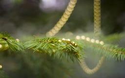 Ramo real do abeto com decorações Fotos de Stock Royalty Free