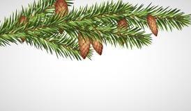 Ramo realistico dell'albero di Natale con i giovani coni Illustrazione di vettore Fotografie Stock