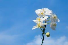 Ramo romântico da orquídea branca Fotos de Stock