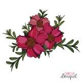 Ramo rosado brillante natural de Camellia Flowers Vector ilustración del vector