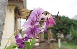 Ramo rosado de la orquídea Foto de archivo