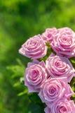 Ramo rosado de las rosas Imagenes de archivo