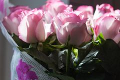 Ramo rosado de las rosas en contraluz Imagen de archivo libre de regalías