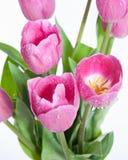 Ramo rosado de tulipanes Imágenes de archivo libres de regalías