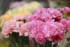 Ramo rosado del clavel Imagen de archivo libre de regalías