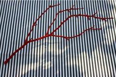Ramo rosso Immagini Stock Libere da Diritti