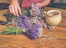 Ramo salvaje violeta en la mano, tijeras de la lavanda del olor hermoso fotografía de archivo libre de regalías