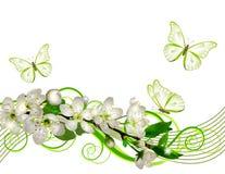 Ramo sbocciante della ciliegia con i fiori bianchi illustrazione vettoriale
