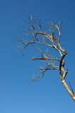 Ramo seco da árvore fotografia de stock