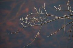 Ramo seco do abeto vermelho com teia de aranha foto de stock
