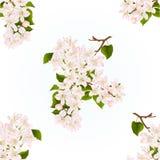 Ramo sem emenda da textura da árvore de maçã com vetor do fundo da mola do vintage das flores Fotos de Stock