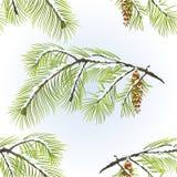 Ramo sem emenda do pinho branco da textura com a ilustração nevado do vetor do vintage do fundo natural do inverno do cone do pin ilustração do vetor