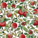 Ramo senza cuciture di melo del modello con l'illustrazione stilizzata dell'acquerello rosso delle mele illustrazione vettoriale