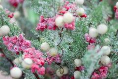 Ramo stagionale della neve di inverno di Natale con berrie rosa e bianco fotografia stock