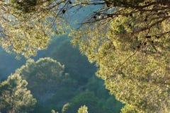 Ramo su un fondo della foresta, Tarragona, Catalunya, Spagna del pino Copi lo spazio per testo Fotografie Stock