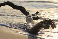 Ramo sulla sabbia Fotografia Stock Libera da Diritti