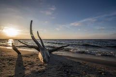 Ramo sulla spiaggia Immagini Stock