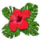 Ramo tropical hermoso de las flores fotos de archivo libres de regalías