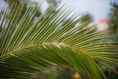 Ramo verde della palma nel sole luminoso Immagine Stock Libera da Diritti
