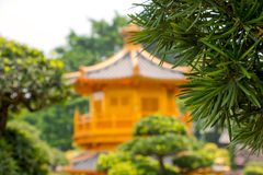 Ramo verde e padiglione dorato Defocused Fotografie Stock Libere da Diritti