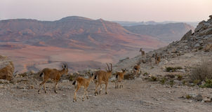 Ramon Crater Royalty Free Stock Photography