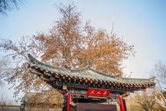 Ramos antigos chineses no inverno Imagem de Stock Royalty Free