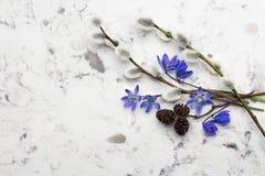 Ramos azuis das flores selvagens Scilla da mola, do salgueiro e do adler no De Foto de Stock Royalty Free